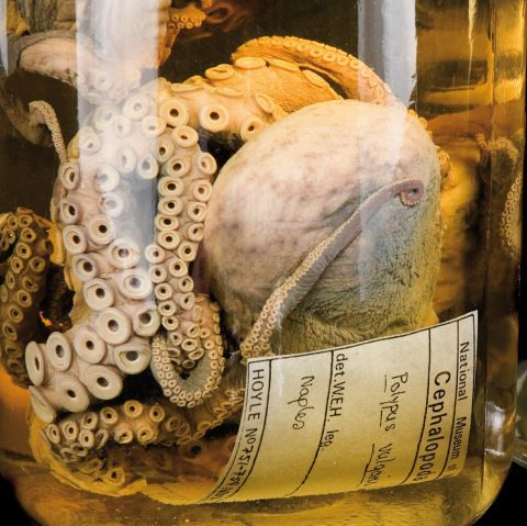Mollusca collections