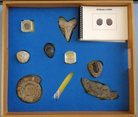 Photo of The Fossil Folklore drawer in the Clore Discovery Centre