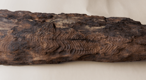 Carved serpentine lines on an ancient timber from Maerdy.
