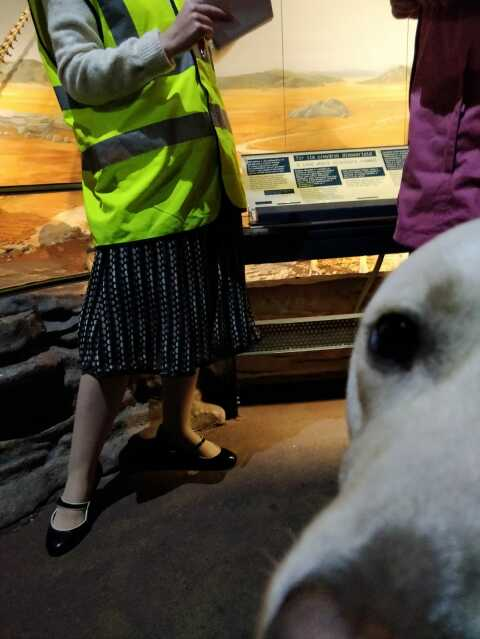 Uri Guide Dog in the Evolution of Wales gallery at National Museum Cardiff