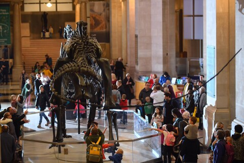Crowds around Dippy the dinosaur