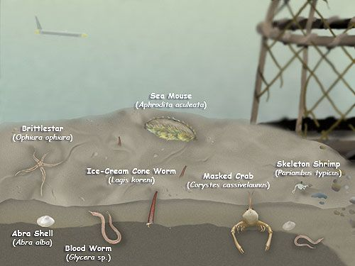 What Lives on the Sea Floor?