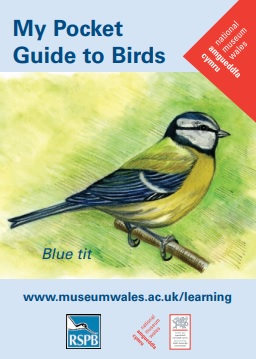 Front cover of the pocket guide to birds containing the title in blue text and an illustration of a blue tit