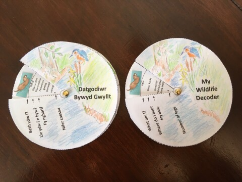 Picture of two completed wildlife decoders