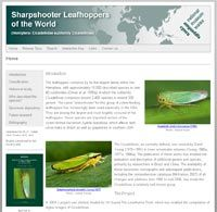 Sharpshooter Leafhpopper Database