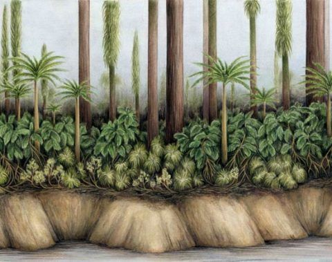 Reconstruction of the levee of a river that flowed through the tropical wetlands 300 million years ago