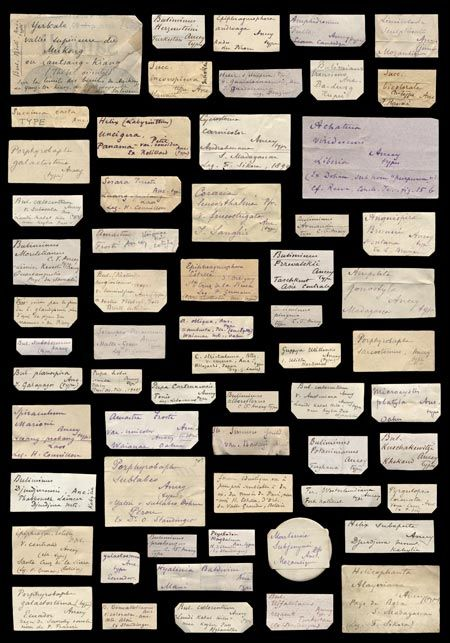 Ancey's handwritten collection labels