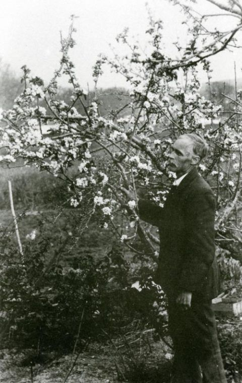 Tom examining one of the apple trees in his orchard