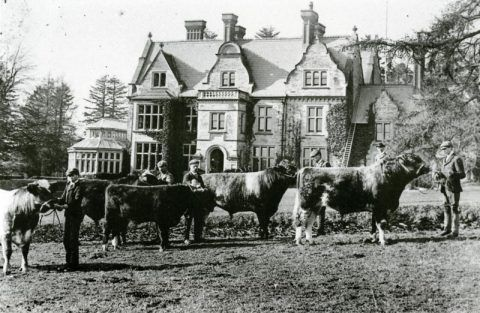 The Rhos-y-gilwen herd proudly displayed in front of the house.
